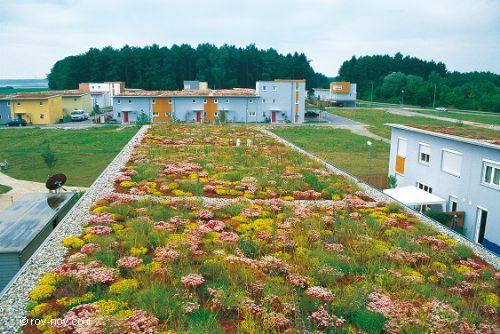 גגות ירוקים בגרמניה