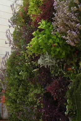 green wall tel aviv
