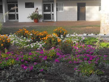 גג ירוק בבית ספר